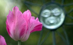 Обои весна, тюльпан, розовый, цветок, ковка, металл, макро