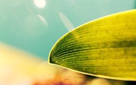 Обои фон, размытое, зеленый, лист, макро, боке
