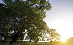 Обои поле, лето, свет, природа, дерево