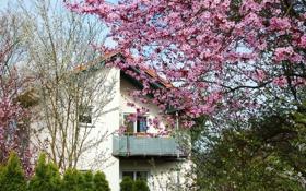 Картинка деревья, дом, весна, сад, балкон, цветущие