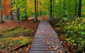 Картинка мостик, лес, осень, Природа, листья