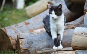 Картинка кошка, кот, дерево, дрова