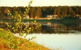 Картинка макро, природа, река, веточка, дома, вечер