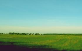 Обои поле, лето, солнце, тепло, деревня
