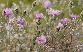 Картинка цветок, макро, цветы, природа, фон, сиреневый, стебли