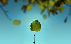 Картинка зелень, небо, макро, природа, лист, листва, листок