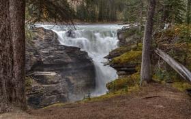 Картинка лес, река, деревья, водопад