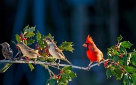 Обои ветка, птичка, красная, смородина, энгри бёрдс, angry bird