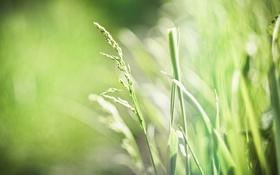 Обои весна, трава, листья, обои, фон, широкоформатные, зеленый