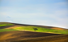 Обои небо, холмы, Италия, Базиликата, поля, дерево