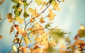 Обои осень, листья, солнце, макро, лучи, деревья, ветки