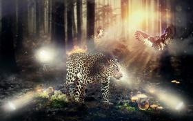 Картинка лес, животные, природа, грибы, леопард, фауна, флора