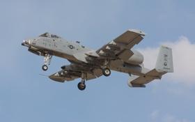 Картинка штурмовик, A-10, Thunderbolt II, одноместный