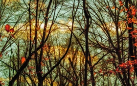 Картинка осень, небо, листья, облака, деревья, ветки