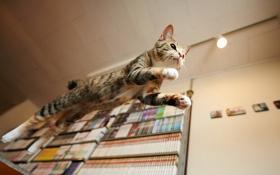 Картинка кошка, дом, прыжок