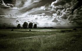 Обои дорога, поле, небо, облака, деревья, пейзаж, природа