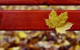 Картинка капли, осень, осенний, желтый, дождь, кленовый, скамейка