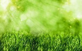 Картинка трава, лучи, свет, зеленая, боке