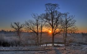 Обои иней, деревья, закат, пруд, забор, вечер