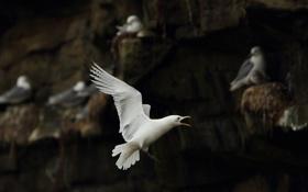 Обои полет, птица, крылья, чайка