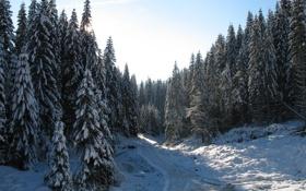 Обои зима, лес, снег