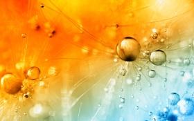 Картинка капли, свет, роса, цвет, былинка