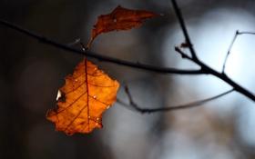 Картинка осень, ветка, литья, HIVER