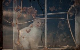 Картинка кошка, кот, окно, сидит