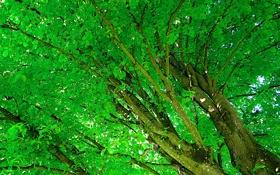 Обои листья, деревья, ствол, крона