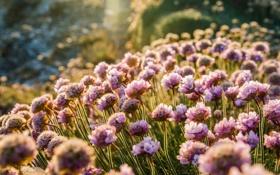 Картинка макро, цветы, природа, фото, поляна