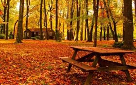 Картинка дорога, осень, лес, листья, деревья, скамейка, природа