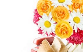 Картинка цветы, розы, book, petals