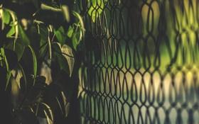 Обои листья, забор, куст, ограда, зеленые