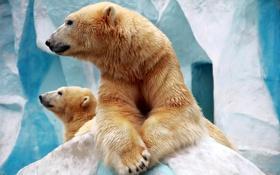 Картинка природа, медведи, зоопарк