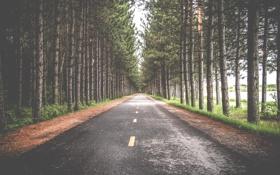 Обои лес, road, симметрия, photographer, sebastien marchand, деревья, дорога