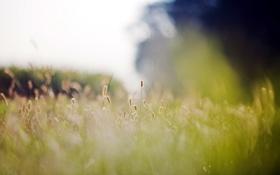 Обои природа, трава, макро