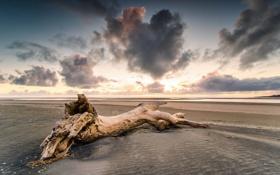 Картинка песок, пляж, закат, дерево, берег, Waikato