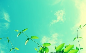 Обои Макро, Зелень, Солнце, Небо, Облака, Фото, Листья