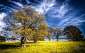 Обои поле, деревья, пейзаж