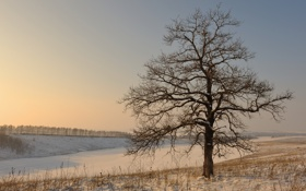 Картинка зима, поле, снег, дерево
