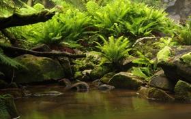 Картинка green, jungle, wood, water, stones, plant