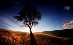 Картинка трава, свет, дерево