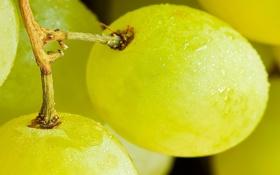 Обои две, фрукт, вкусно, сочные, спелые, виноградинки
