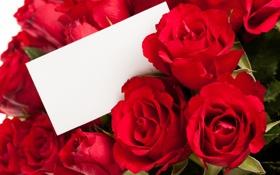 Обои розы, Цветы, открытка