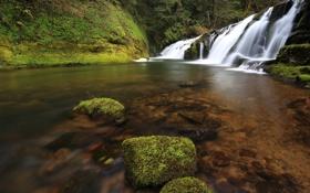 Картинка США, камни, река, East Fork Coquille River, вода, Oregon, мох
