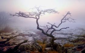 Картинка осень, туман, дерево, утро