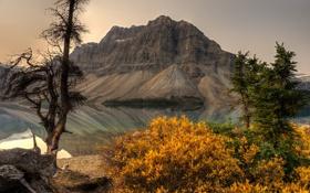 Обои гора, Канада, Альберта, Banff National Park, Alberta, Canada, кусты