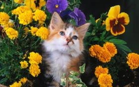Обои кошка, кот, цветы, cat