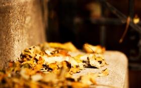 Картинка осень, листья, листва, камень, перила, ступеньки, жёлтые