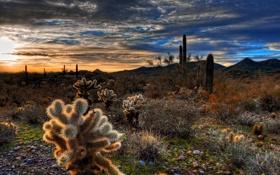 Обои пейзаж, закат, природа, пустыня, кактусы